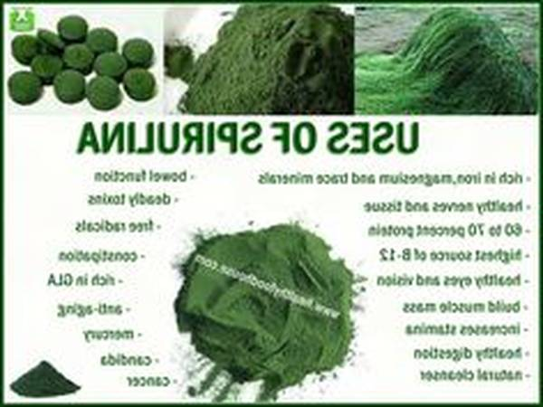 spiruline algue