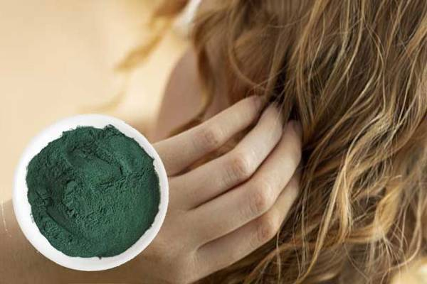 Spiruline wikipedia : cout - haute performance - best