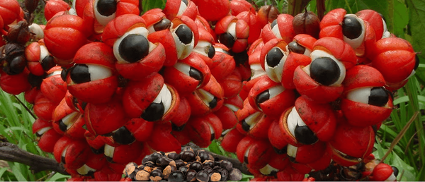 Guarana pharmacie : offre unique - exclusif - guide